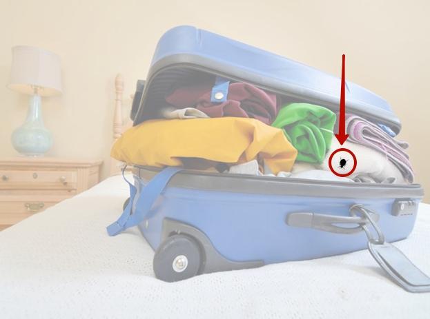 клопы в чемодане