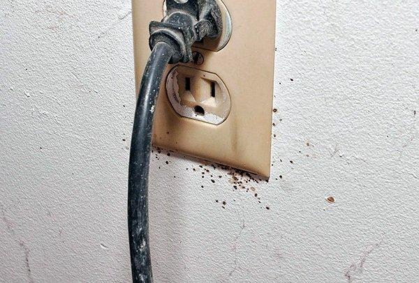 розетки и выключатели заселяются клопами
